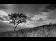 Carol Rhodes ~ The Tree