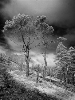 Eric M Ladbury ~ Pines Among the Scree