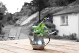 Graham Bostock ~ Make Mine A Heabal Tea