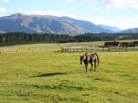 Graham Bostock ~ New Zealand Vista