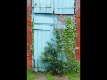 Judith Newton ~ Blue Door