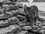 Paul McLaughlin ~ On the Prowl