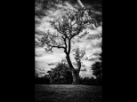 Silke Neugaertner ~ Light Struck Tree