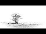 Silke Neugaertner ~ Lonely Tree