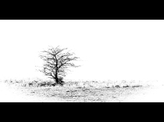 Silke Neugaertner ~ Lonely Tree