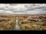 Silke Neugaertner ~ Rainy Path