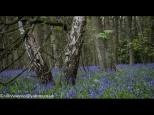 Silke Neugaertner ~ Spring