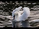 Silke Neugaertner ~ Water Ballet