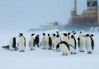 On the Weddell Sea